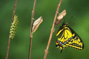 Seminario Gratuito La Menopausa come vivere serenamente il cambiamento